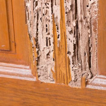 signs  termite infestation abc blog