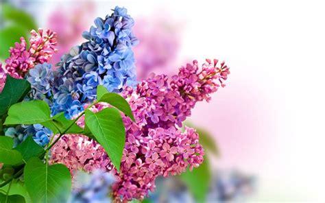 Kinder Hintergrundbilder Kostenlos Herunterladen Frühling Spacaderso