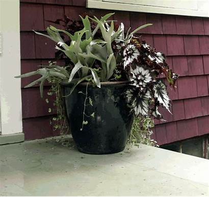 Shade Containers Gardening Designing Fine Degree Garden