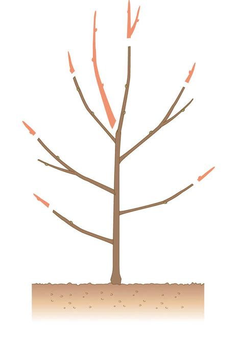 alten apfelbaum schneiden extrem alten apfelbaum schneiden ha12 casaramonaacademy
