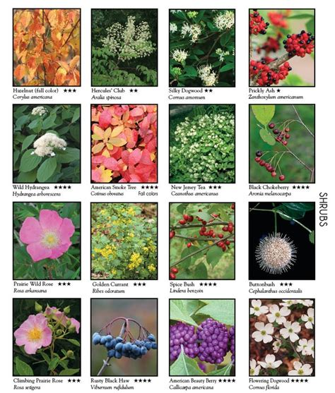 name of shrub this has the names of numerous wild flowers shrubs and vines outdoors pinterest shrubs