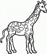 Coloring Pages Giraffes Giraffe Printable Popular sketch template