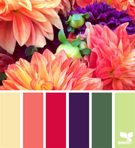 flower colors flora palette design seeds