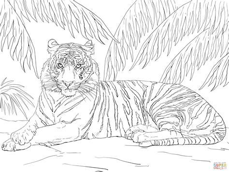 sumatran tiger laying  coloring page  printable