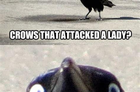 Crow Meme - crow meme