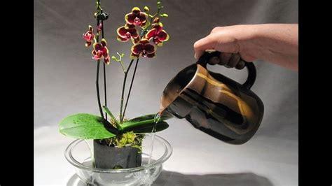 Vasi Trasparenti by Vasi Per Orchidee Vasi Tipologie Di Vasi Per Orchidee