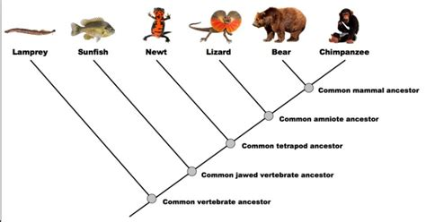 read  dendrogram  institute  canine biology