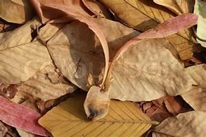 Bäume Für Trockenen Boden : baum samen fallen zu boden mit trockenen bl ttern ~ Lizthompson.info Haus und Dekorationen