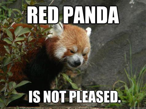 Red Panda Meme - red panda is not pleased angry red panda quickmeme