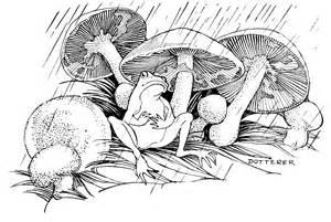 Vintage Frog Drawings