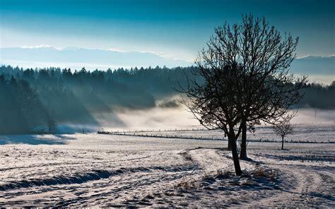 Winter Landscape Desktop Wallpaper Download Wallpaper Field Fog Tree Nature Free Desktop Wallpaper In The Resolution 1680x1050