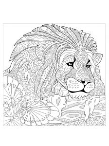 sea lion coloring pages  adults