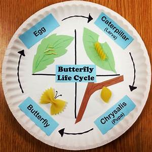 Butterfly life cycle using pasta and paper plates. This ...