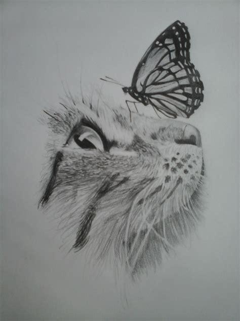 chat  papillon regard dessin au crayon gris mes