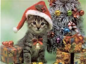 santa cat animals and animal space