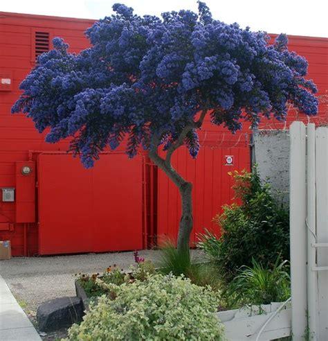 Alberi per piccoli giardini (su Houzz) Giardinaggio