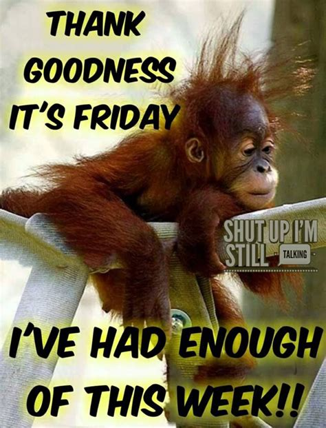 goodness  friday ive     week