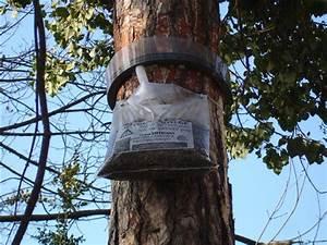 Piège à Chenilles Processionnaires : actualit s internet ville de meylan ~ Dailycaller-alerts.com Idées de Décoration