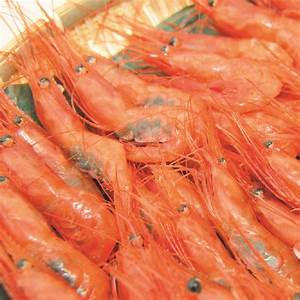 Japanese Fresh Shrimp | Nippon Mart