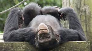 What's the Difference Between Apes and Monkeys?   Wonderopolis