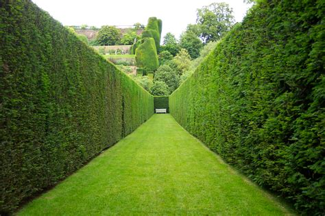 hedge gardens hedges v fences charlie dimmock s gardening blog let s fix it