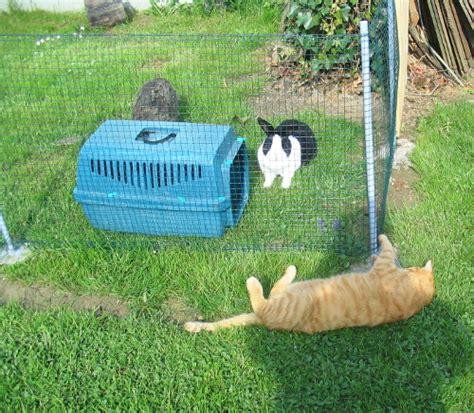kaninchen auslauf selber bauen einfaches freigehege f 252 r kaninchen selber bauen bauen und gestalten