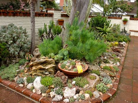 reader photos a gem of a succulent garden gardening