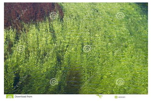 algae algae song free download