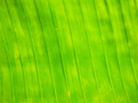 banana leaf backgrounds pixelstalknet