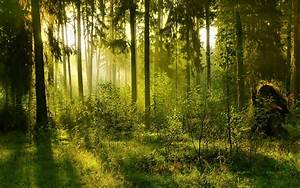 Forest Desktop Background Wallpapers 14664