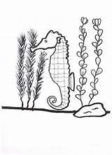 Seaweed Coloring Seahorse Kelp Drawing Around Getdrawings Printable Nature Getcolorings sketch template