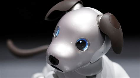 wallpaper sony aibo robot dog   tech