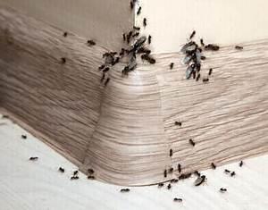 Ameisen Mit Flügel In Der Wohnung : ameisen in der wohnung diese mittel helfen ameisen ratgeber ~ Orissabook.com Haus und Dekorationen