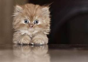 Big eyes kitty - Teh Cute