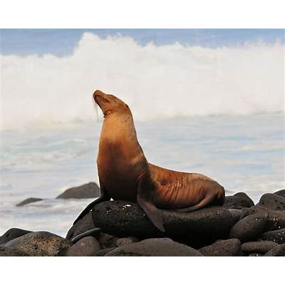 File:Galápagos Sea Lion (4885191658).jpg - Wikimedia Commons
