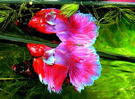 aquarium ab wann fische einsetzen arten und gruppen s 252 223 wasser zierfischen im aquarium