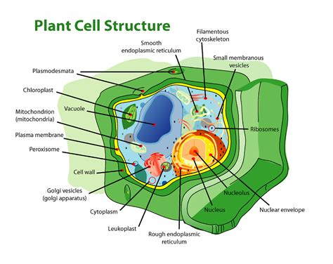 labeled cell diagrams high quality diagram site