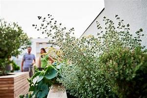 Pflanzen Für Dachterrasse : dachterrasse pflanzen tulpen baum ~ Bigdaddyawards.com Haus und Dekorationen