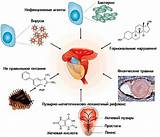 Таблетки от аденомы простаты и для потенции