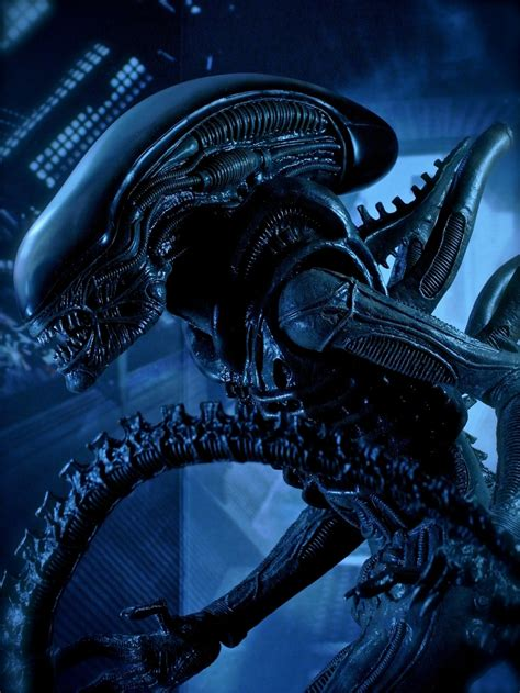 aliens   wallpaper entertainment movies hd