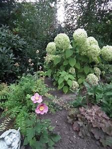 Hortensien überwintern Im Garten : image ~ Frokenaadalensverden.com Haus und Dekorationen