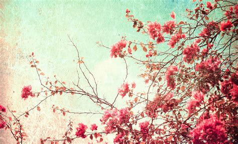 vintage flowers wallpapers images  pictures backgrounds