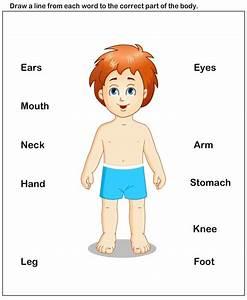 Science Worksheets - Preschool Worksheets