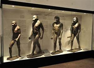 Humans became the large-brained, large-bodied animals we ...