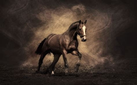 horse cool backgrounds 2560a 1600