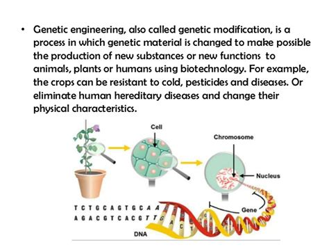 Modification Genetic Organisms by What Is Genetically Modified Food Gm Foods Pros Cons