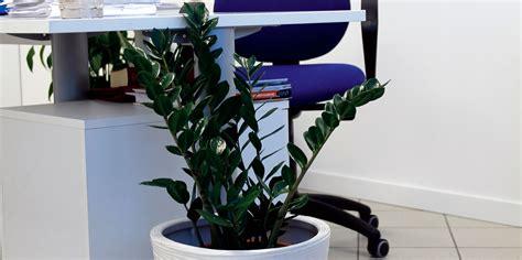 piante ufficio piante in ufficio cose di casa
