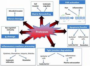 List of Proteolytic Enzymes and the Benefits of Protease ...