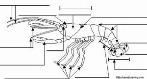 Label Crayfish External Diagram Printout