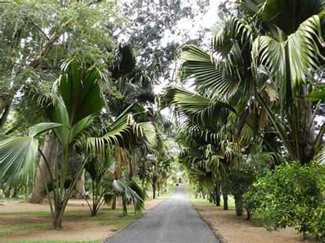 Botanischer Garten Sri Lanka by Botanischer Garten Kandy Kendi Peradeniya